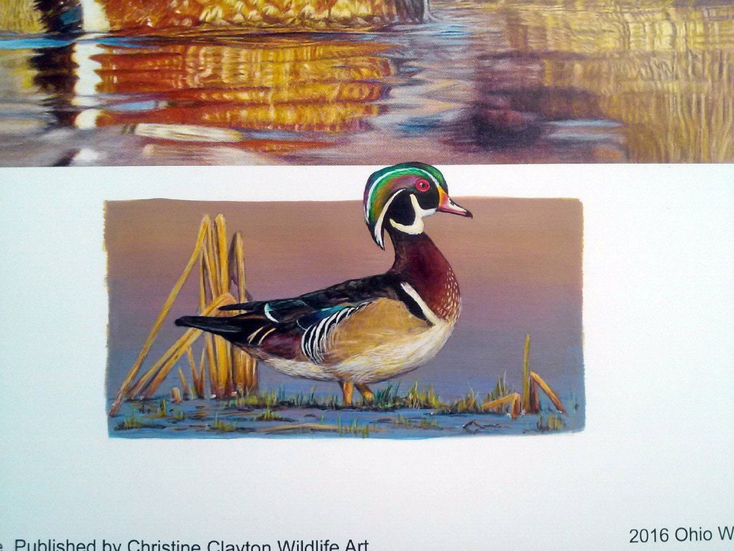 Artwork Gallery - Christine Clayton Wildlife Art